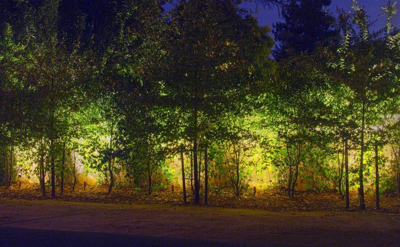 backlit tree grove side wall East Sacramento, CA