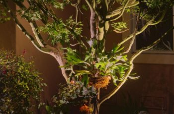 Project 4 - Highlight Feature Lighting Japanese Maple and Staghorn Fern