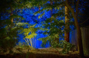 Project 11 - Sequoia Grove Blue Background Uplighting