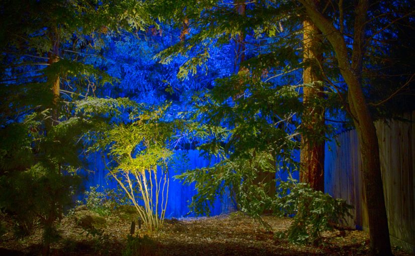 Project 11 – Sequoia Grove Blue Background Uplighting