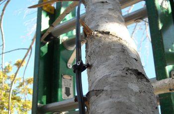 Installation - Wires Running Up Tree