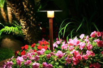 Maintenance 3 - Light Shower Over Flowers