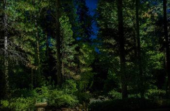 Landscapes2